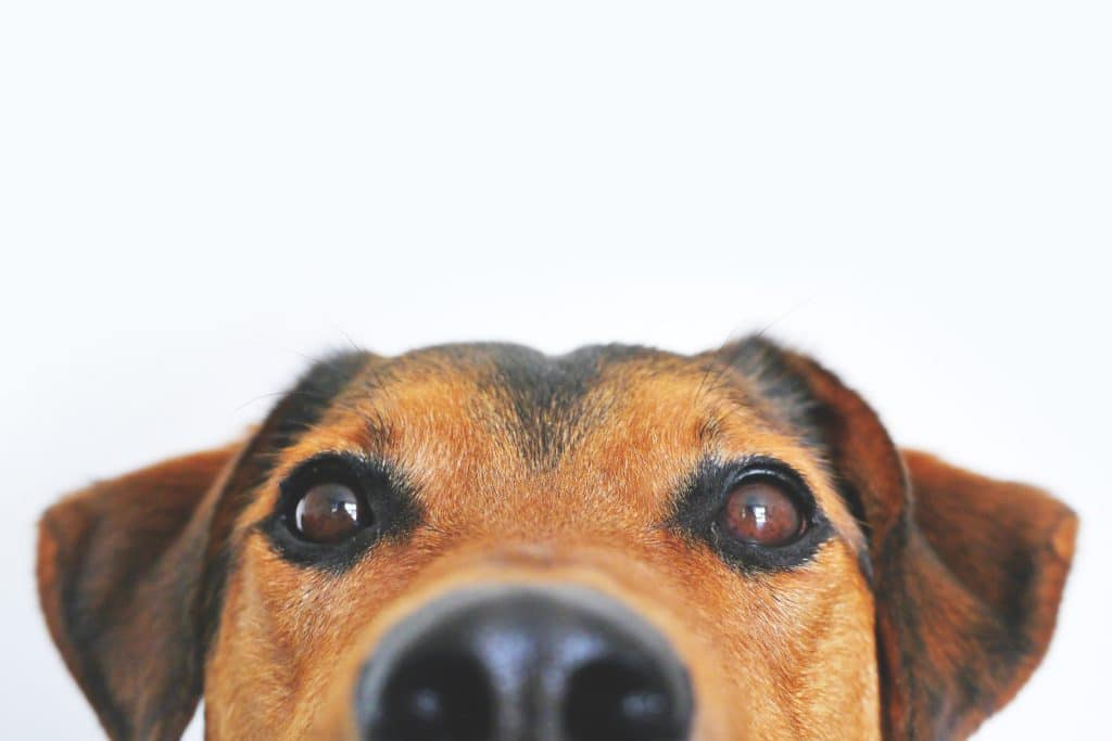 cute dog email marketing